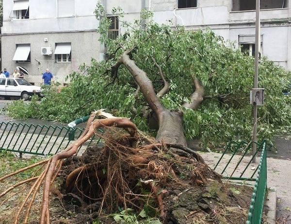 Maltempo a Napoli, pericolo alberi: domani scuole chiuse