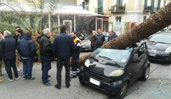 Cade una palma gigante, tragedia sfiorata al Vomero