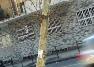 Vomero, albero rischia di cadere in mezzo al traffico: strada chiusa per abbatterlo