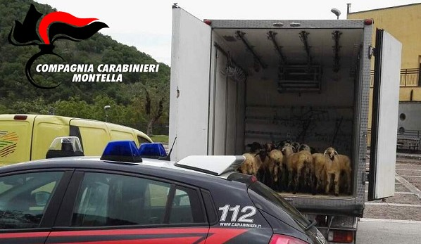 Trasportano 21 agnelli vivi in una cella frigorifera, denunciati 2 commercianti di Somma Vesuviana