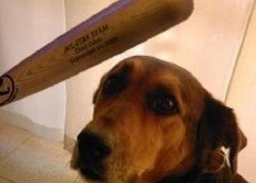 Capaccio, giovani bastonano cane: aggredita bagnina che lo difende