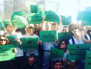 cannabis de magistris