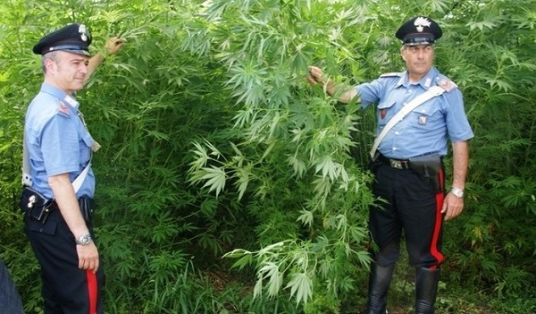 Lettere: cannabis sui Monti Lattari, scoperte e distrutte 53 piante