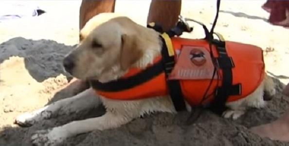 Palinuro, cane-bagnino salva turista che affogava