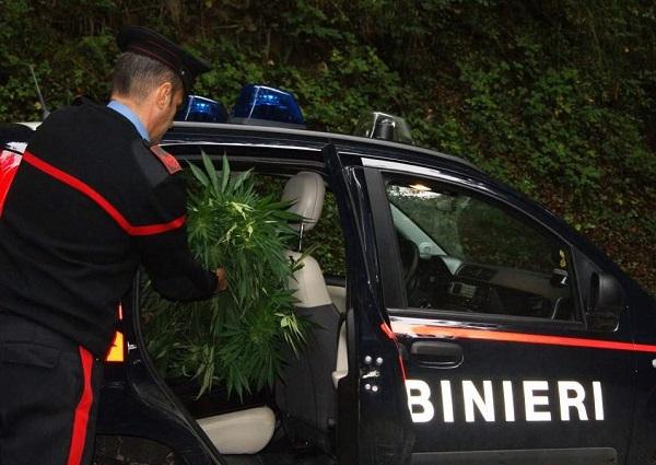 San Felice a Cancello, coltiva marijuana in casa: arrestato