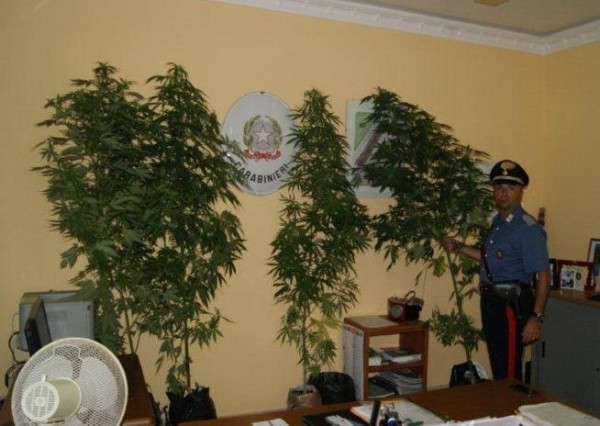 Benevento, scoperta piantagione di cannabis in area demaniale