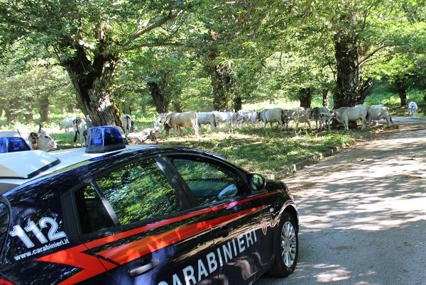 Montella, condannato a 1 anno per detenzione di munizioni: arrestato allevatore