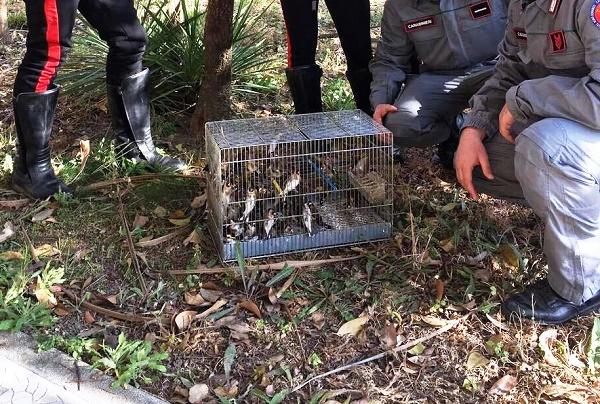 Grumo Nevano, nel sottoscala 52 uccelli di specie protetta: denunciato 55enne