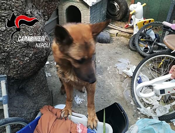 Napoli, deteneva cani in pessime condizioni: denunciato 36enne a Chiaiano