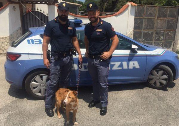 Pozzuoli, calci e bastonate al cane: rivolta nel vicinato, denunciato 31enne
