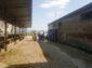 Santa Maria Capua Vetere, reati ambientali: sequestri, multe e denunce a tappeto