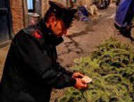 Napoli, è tradizione: rubato e ritrovato l'albero in Galleria. E le ronde dei Verdi?