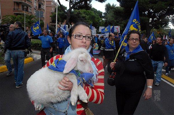 Sardegna, la lotta dei pastori contro Confindustria