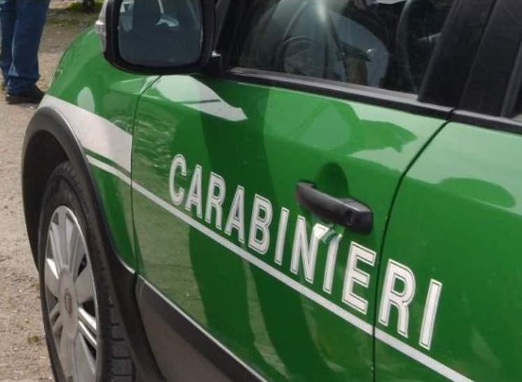 Alta Irpinia, carabinieri sequestrano concimi e alimenti