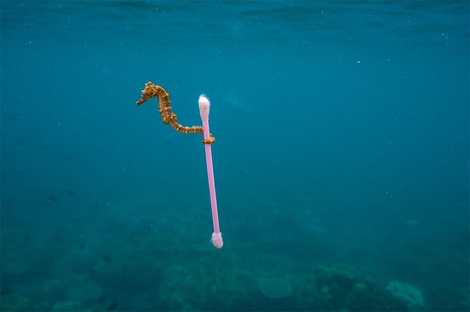 Napoli, Bagnoli: liberiamo il mare dalla plastica, un convegno di Arci Pesca