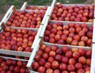 Salerno: Battaglia per difendere in Made in Italy, frutta in regalo in attesa della fiaccola