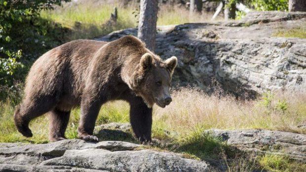 Non ammazzate l'orso Papillon!