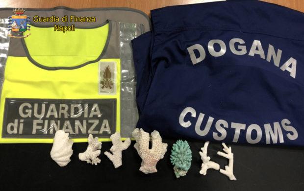 Napoli, Capodichino: sequestrati coralli e conchiglia protetti