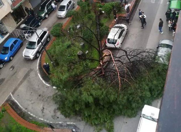Maltempo a Napoli, altra tragedia sfiorata: crolla albero in via Nicolardi