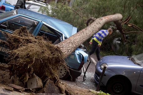 Napoli, tragedia annunciata: un uomo schiacciato da un albero a via Nuova Agnano