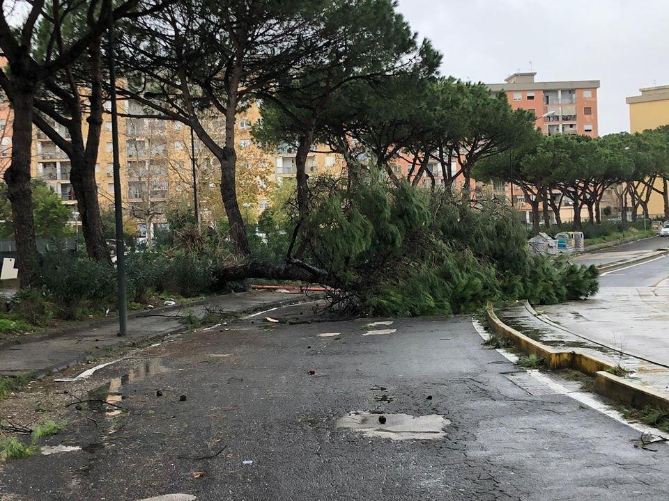 Il vento sferza, a Napoli  psicosi alberi: crolli ovunque