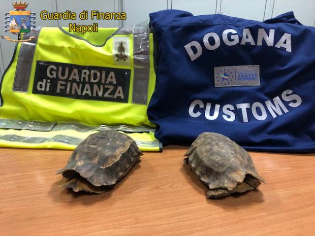 Napoli, sequestrate tartarughe specie protette