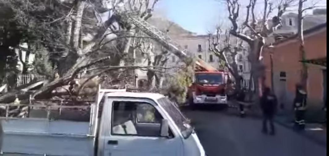 Cava dei Tirreni: cade albero, un uomo perde vita