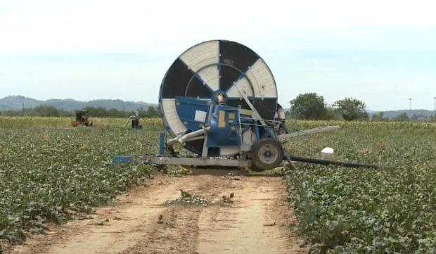 Crisi e coronavirus, le Pmi agricole puntano sull'innovazione
