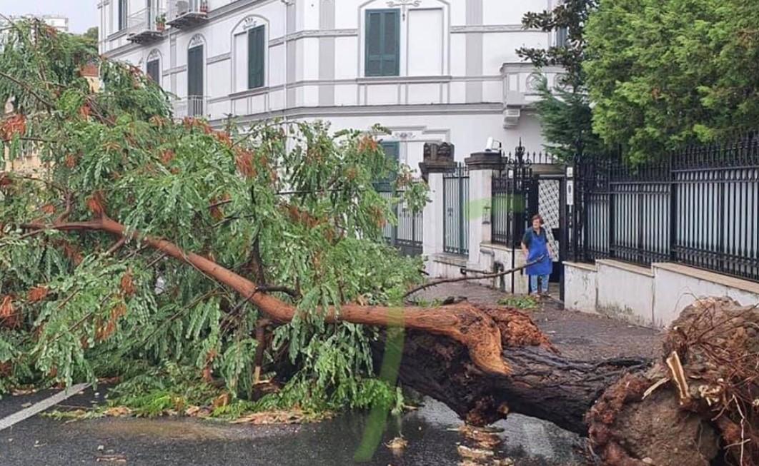 Bomba d'acqua su Napoli: alberi crollati, cede tettoia
